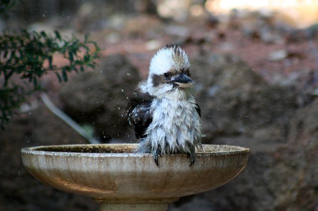 Bañeras para jilgueros